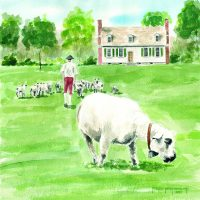 House with sheep MS